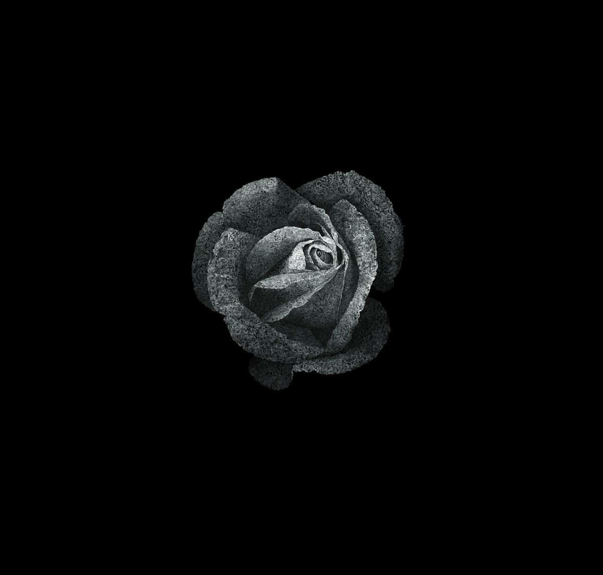 aaru-rosa