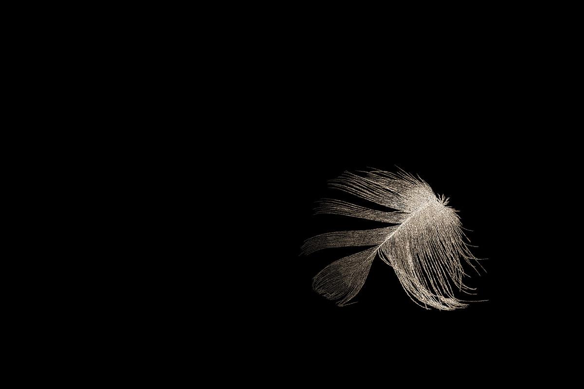 aves-2