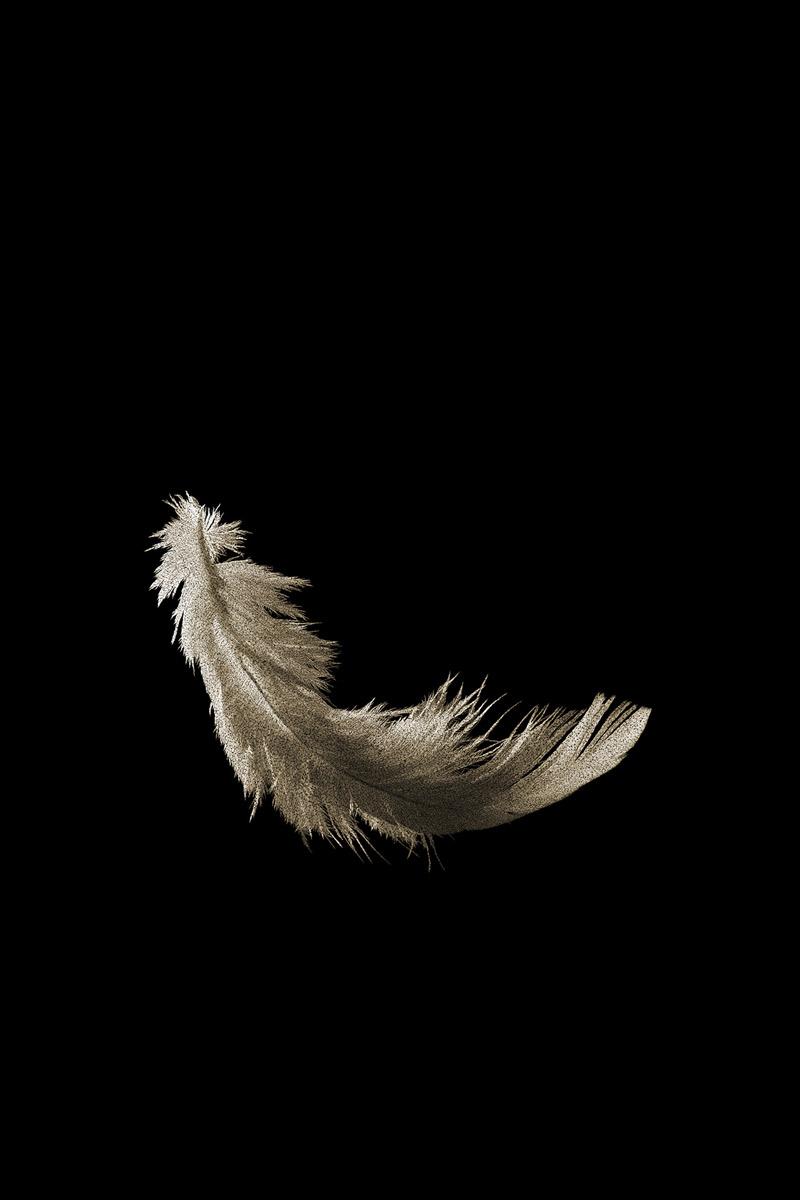 aves-8